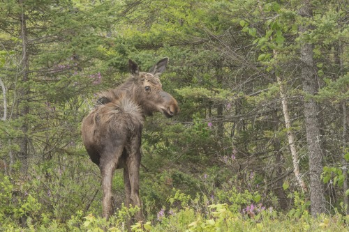 20150605-07 Festival of Nature and Moose-139